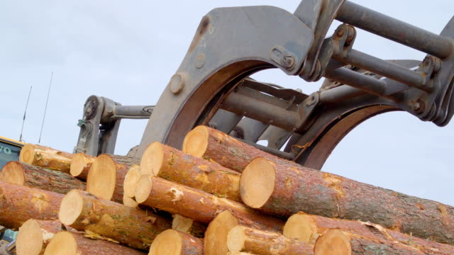 the pine tree logs being transferred on the ground - segatura video stock e b–roll