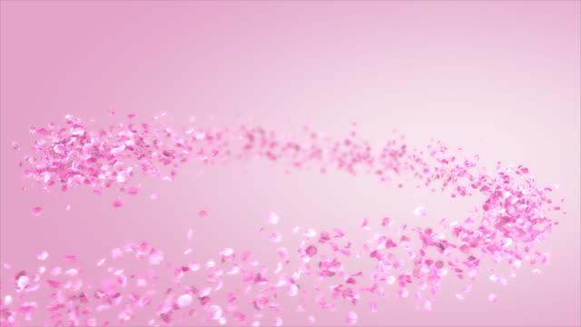 vídeos y material grabado en eventos de stock de la flor de clavel rosa se mueve en un patrón espiral - pétalo