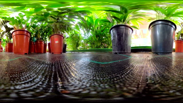 The plants inside the pots on the garden 360 virtual video