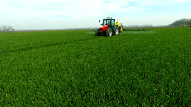 the protection of plants.tractor spraying a green wheat field. aerial view - attività agricola video stock e b–roll