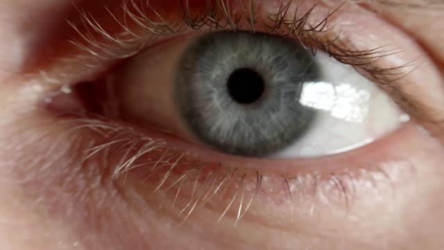 vidéos et rushes de la pupille de le œil se resserre après une lumière intense - tête d'un animal
