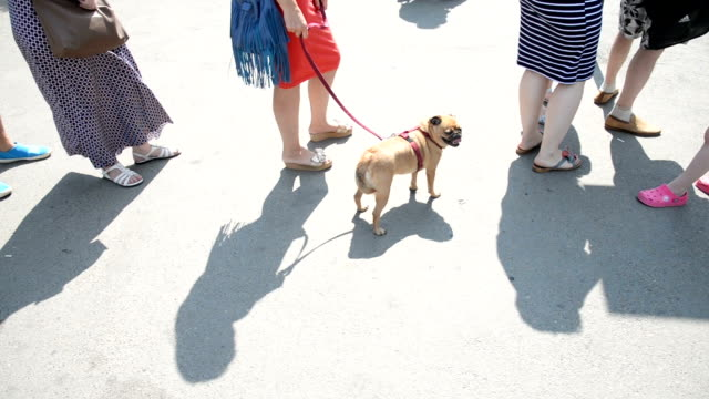 the queue of people. a woman is holding a gryphon dog on a leash - lungo video stock e b–roll