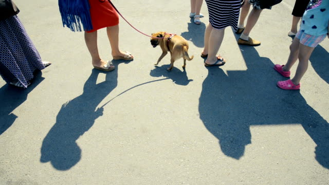 The queue of people. A woman is holding a Gryphon dog on a leash video