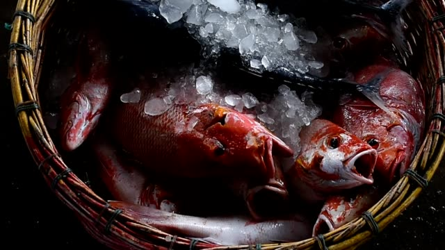 the red snapper with ice