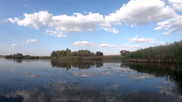 The reed-covered shore and blue water of the lake The reed-covered shore and blue water of the lake. Summer landscape. Slow motion duckweed stock videos & royalty-free footage