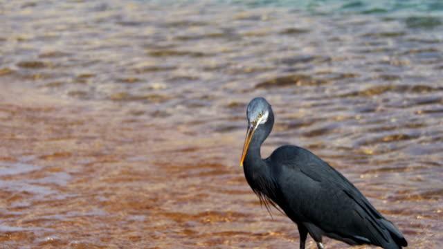 resif heron mısır'daki kızıl denizin sahilde balık avı - okyanus gemisi stok videoları ve detay görüntü çekimi