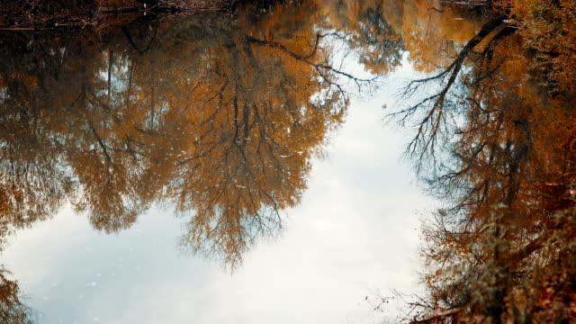 vidéos et rushes de le reflet des arbres dans l'eau qui coule - lac reflection lake