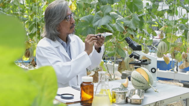 the researchers tested the sweetness of the melon crop varieties for research and development. - clima video stock e b–roll