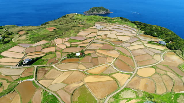 the rice terrace in Japan video