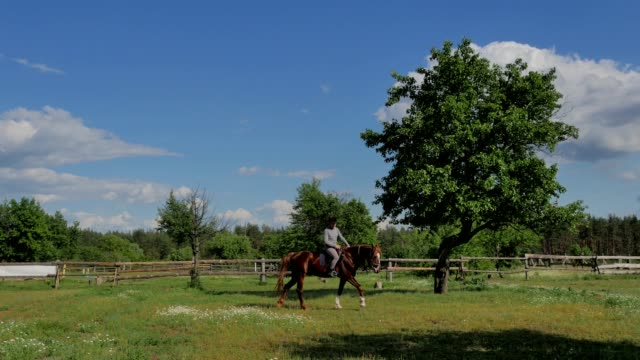 The rider in helmet riding on the horse on meadow video