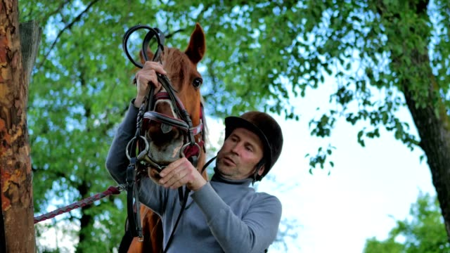 The rider put on the bridle on the horsey muzzle video