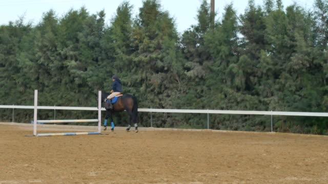 vídeos de stock, filmes e b-roll de o piloto anda em cavalo no manege - campeonato esportivo