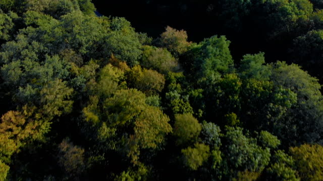 the river flows through the forest – film