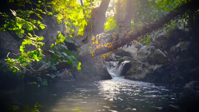 the river that flows in the dim-lit forest