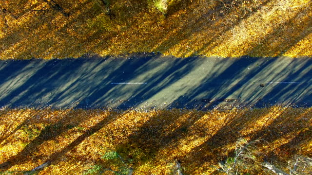 The Road in The Fall. Aerial Survey video