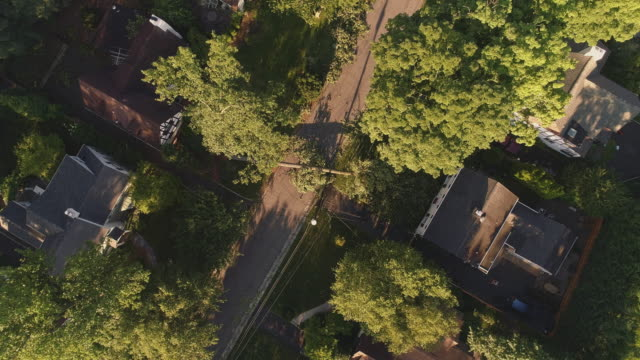 the road is closed because of a dangerous wind in a suburb. a fallen tree barricaded the street in a small town in new jersey after a storm.aerial video with the descending and spinning camera motion. - albero caduto video stock e b–roll