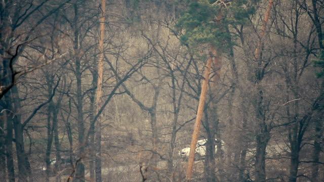 vídeos de stock e filmes b-roll de the road through the forest in the spring season - berma da estrada