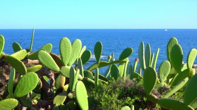 vídeos de stock e filmes b-roll de the rocks overlooking the sea host plants - fenómeno natural