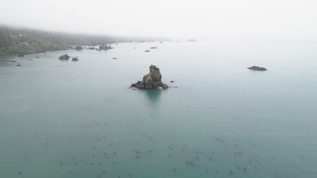 The rocky shore of Pacific Ocean near Trinidad, West Coast, California. Foggy calm day. Aerial video with  forward camera motion.