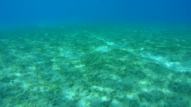 the sandy bottom covered with sea grass, red sea, marsa alam, abu dabab, egypt - sky diving video stock e b–roll