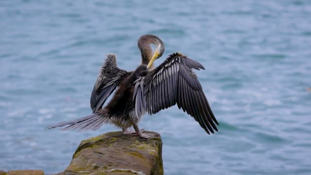 The seabird sits on a stone and cleans its feathers with its beak