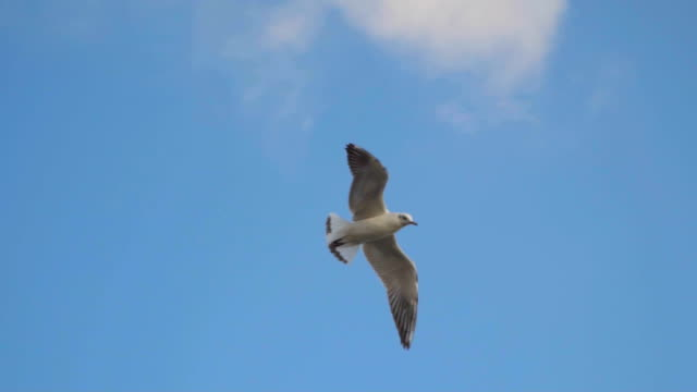 The seagull is flying against the sky with clouds