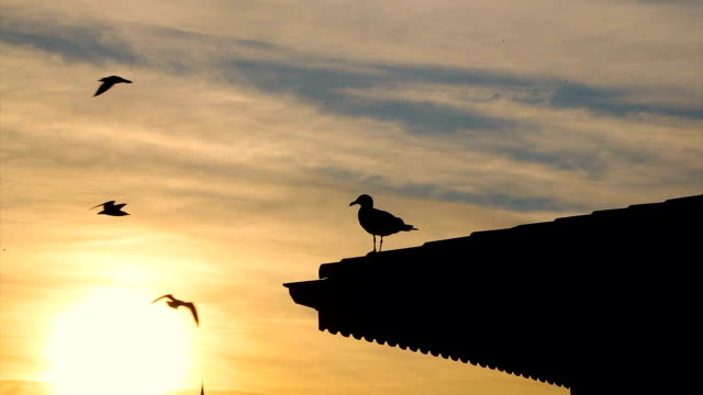 The seagull on the roof