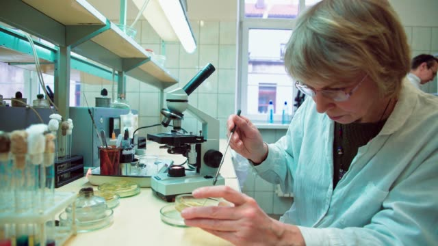 The senior 50-years-old women, scientists, working together with the microscope and bacterial culture in the college microbiology lab video