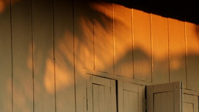 skuggan av kokosnöt en vägg av ett trähus - solar panel bildbanksvideor och videomaterial från bakom kulisserna