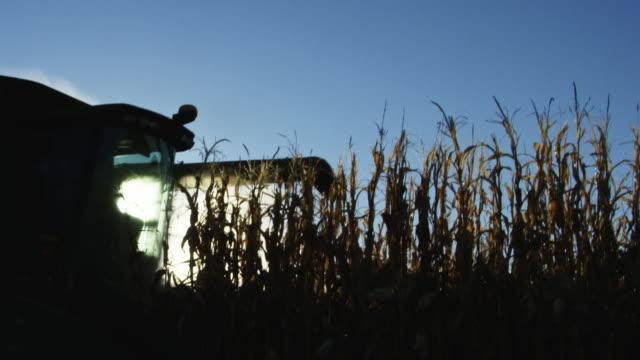 vidéos et rushes de la silhouette d'une moissonneuse-batteuse avec une vis sans fin se déplace à travers un champ de maïs sous un ciel bleu - maïs culture