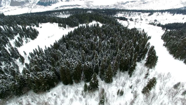 Der langsame Flug einer Drohne über einem schneebedeckten Nadelwald unter den Bergen in 4K – Video