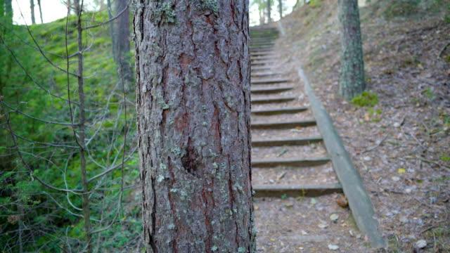 de små stegen som går upp på skogsmarken i piusa - fur bildbanksvideor och videomaterial från bakom kulisserna