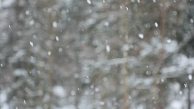the snowflakes in winter - video di tree video stock e b–roll