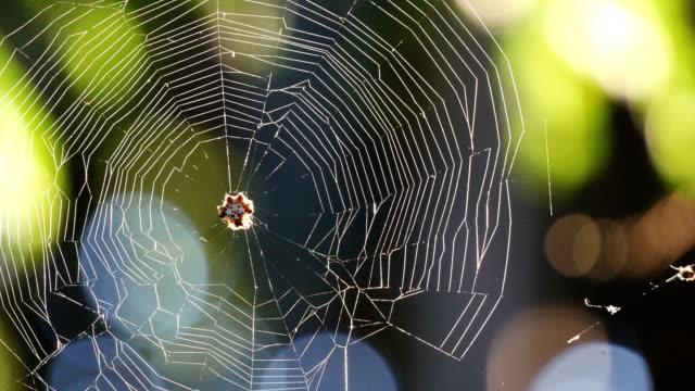 The spider web (cobweb) video
