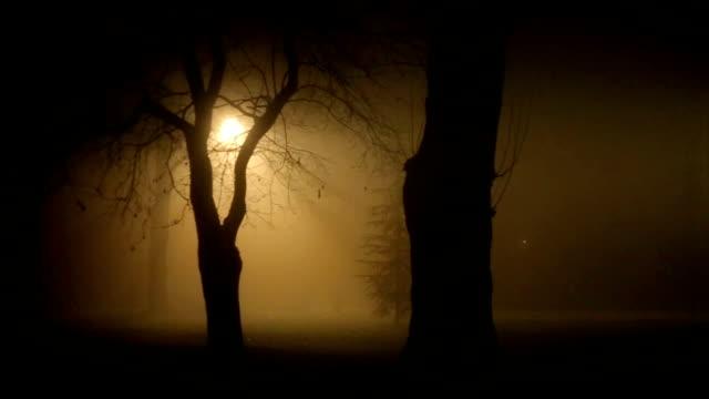 upiorna scena parku w głębokiej mgle w nocy - ludzka osada filmów i materiałów b-roll