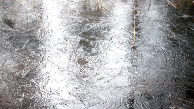 The spring wood flooded with water and which has frozen under ice