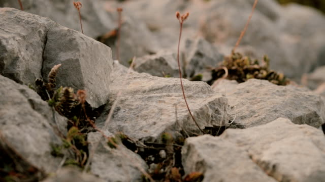 die steinen fallen und unten eng aufrollen - stein baumaterial stock-videos und b-roll-filmmaterial