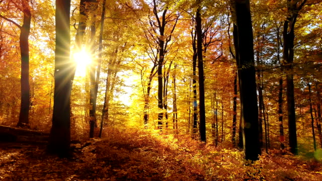 The sun casts beautiful rays into the autumn forest