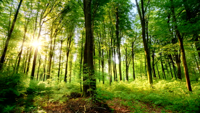 the sun casts its beautiful rays into the fresh green forest, time lapse - спокойствие стоковые видео и кадры b-roll