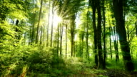 istock The sun casts its beautiful rays into the fresh green forest, time lapse 1168431157