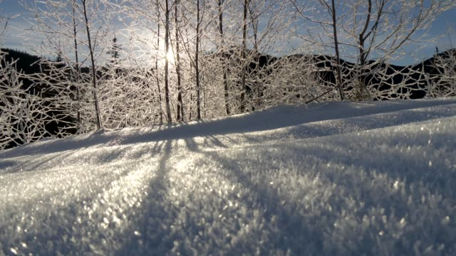 the sun is shining through the frozen trees. sunrise in the mountains. gimbal stabilized shot - fronda video stock e b–roll