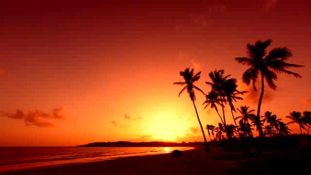 The sun sets over the horizon on a beautiful tropical beach. Silhouettes of tall palm trees against the background of a red sunset sky
