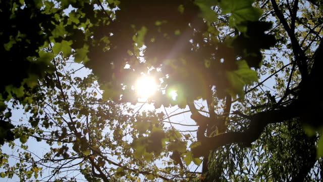 The sun shines through the trees video