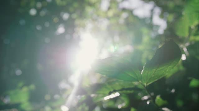 The sun shining through dangling leaves – film