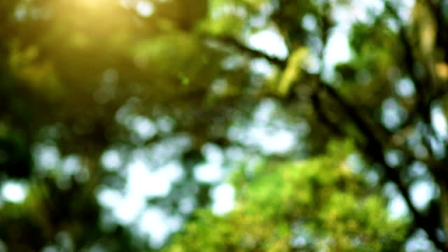 The Sunlight Through the Green Pine Trees video