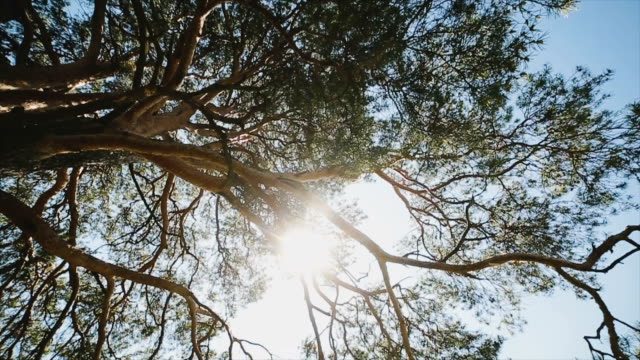 The sun's rays shine through the branches and leaves of the tree video