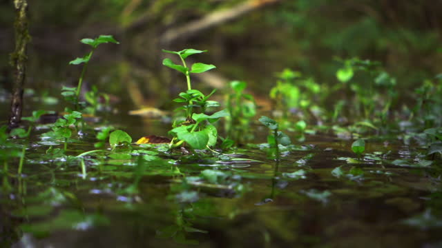 The surface of the pond with water plants. Close-up.