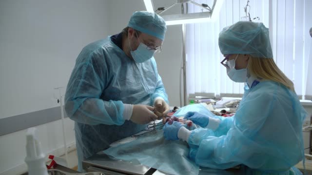 The surgery in the veterinary clinic. The team of two veterinary doctors, the man, surgeon, and the woman, nurse, sawing the cat in the operational room. Sewing the wound. video