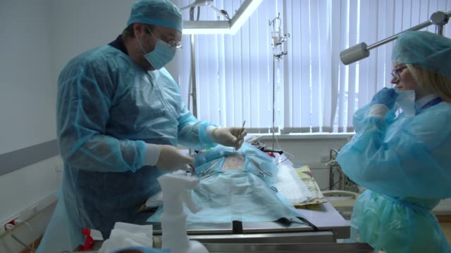 The surgery in the veterinary clinic. The team of two veterinary doctors, the man, surgeon, and the woman, nurse, sawing the cat in the operational room. Starting the operation with the first cut of the belly. video