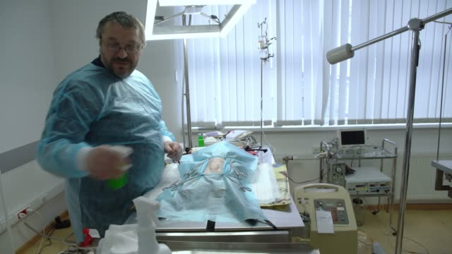 The surgery in the veterinary clinic. The veterinary doctor sawing the cat in the operational room. Pre-op preparation, cleaning the belly of the cat. video